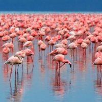 Παρατήρηση Πουλιών(Birdwatching)