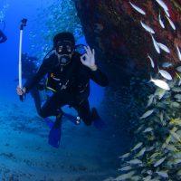 Εξερευνήστε τον θαλάσσιο κόσμο
